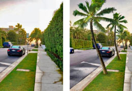 75 Palms Program in the Town of Palm Beach
