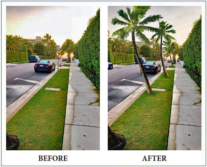75 Palms Before and After in the Town of Palm Beach
