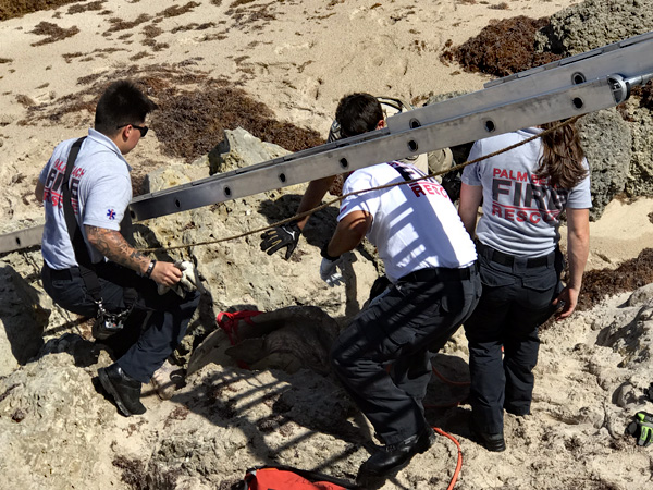 Town of Palm Beach Fire Rescue on Turtle Recovery Mission