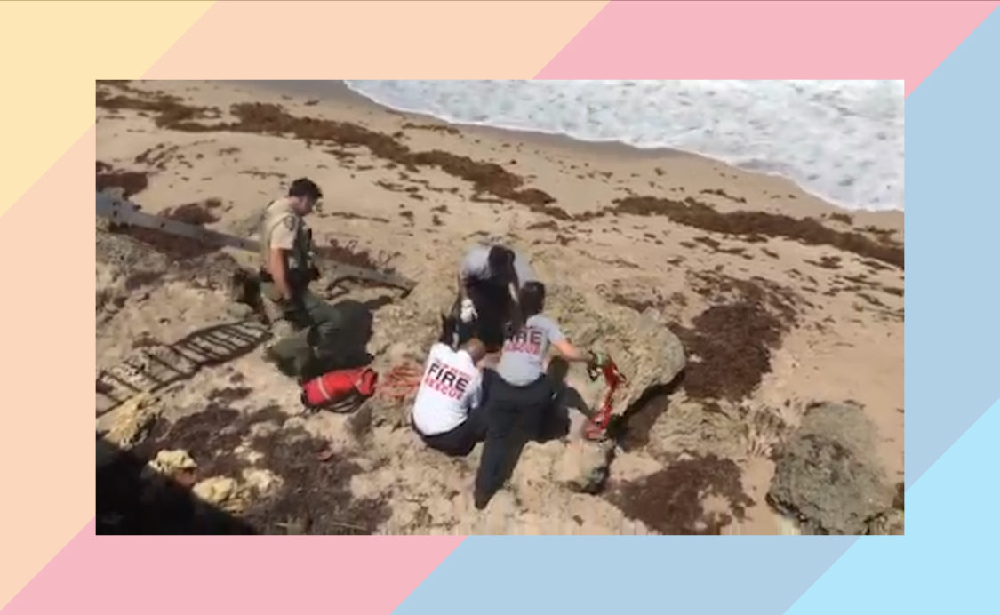 Sea Turtle Recovery from Town of Palm Beach 5-1-2019