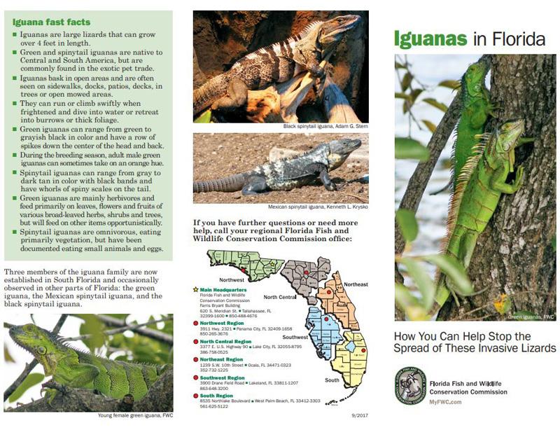 Iguana Brochure