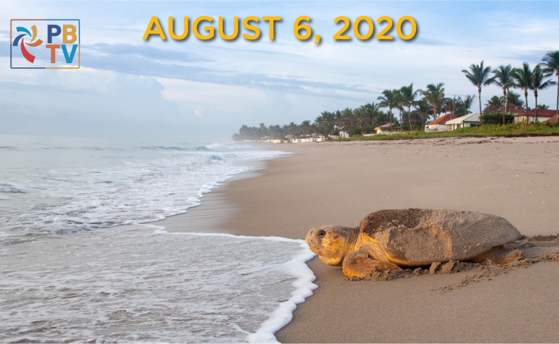 Palm Beach TV August 6, 2020